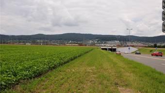 Dietikon, Müsli: Hier wächst Soja und weiter hinten Weizen. Bald soll hier das Limmattalbahn-Depot stehen. DEG