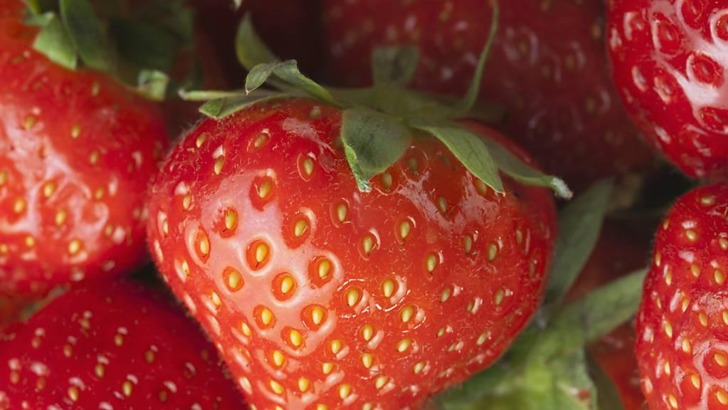 Basler Botaniker entwickelten eine Methode, um Lebensmittelbetrug aufzudecken. Überprüft und getestet haben sie das Modell an einem Referenzdatensatz für Erdbeeren. (Themenbild)