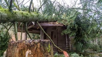 Lenzburger Wälder nach den Wetterkapriolen 2018
