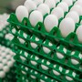 Das Mindesthaltbarkeitsdatum ist laut Too Good to Go ein «Qualitätsindikator». Oft seien Eier darüber hinaus geniessbar. (Symbolbild)