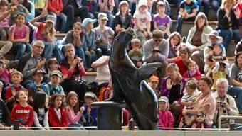 Bald kein Publikumsmagnet mehr in Rapperswil: die Seelöwen.
