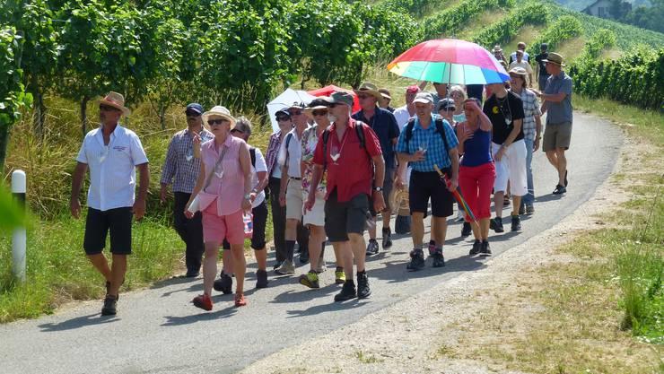 Auf der heissen Weinwanderung durch Tegerfelden Rebberge, hier im Alten Berg.