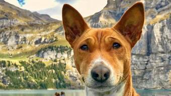 Beste Schnappschüsse im Oktober 2018: Tiere