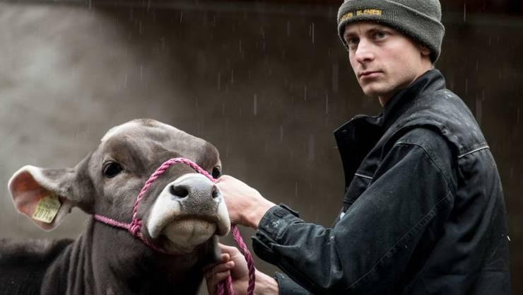 Die Tierhaltung ist der wichtigste Erwerbszweig in der Schweizer Landwirtschaft. Vor allem der Rindviehbestand nimmt immer noch leicht zu. Landwirtschaftsbetriebe gibt es zwar immer weniger, dafür grössere (Archivbild)