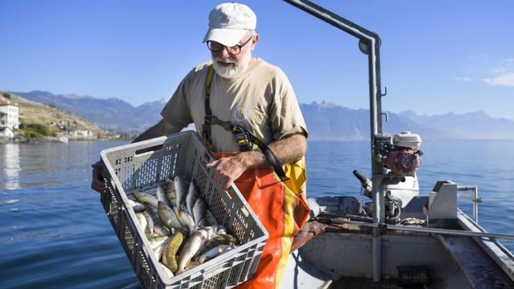 2018 haben die Fischer am Genfersee eine kleinere Ausbeute gemacht. Die Erträge sanken um knapp ein Fünftel im Vergleich zum Vorjahr. (Archivbild)