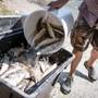 Die Fische starben wegen verunreinigtem Wasser. (Symbolbild)