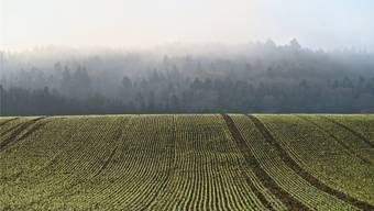 Bauernvertreter fordern den Schutz guter Ackerflächen. Dabei sind es just die Bauern selbst, die viel wertvolles Ackerland verschlingen. (Symbolbild)