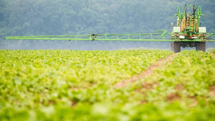 Der Einsatz des umstrittenen Pflanzenschutzmittels Glyphosat führt zu hitzigen Diskussionen.