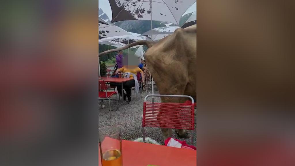 Hier pinkelt eine Kuh mitten auf die Besucherterrasse