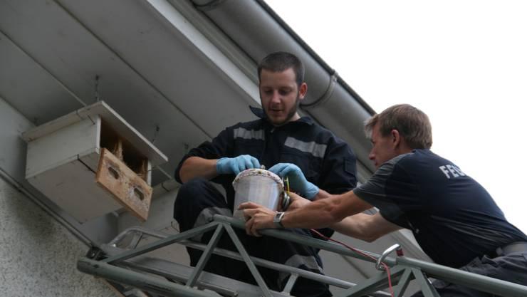 Feuerwehrleute bei der Nestentnahme der Mauersegler für die Beringung.