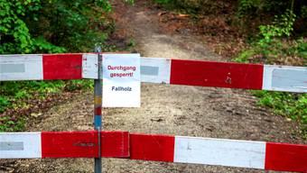 Abgestorbene Bäume im Hardwald können abbrechen und Passanten verletzen. Deshalb ist der Zugang derzeit nicht mehr erlaubt. Kenneth Nars