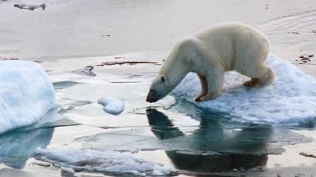 Eisbär auf einer Scholle in Russland - die Arktis erwärmt sich doppelt so schnell wie der Rest der Erde (Symbolbild)