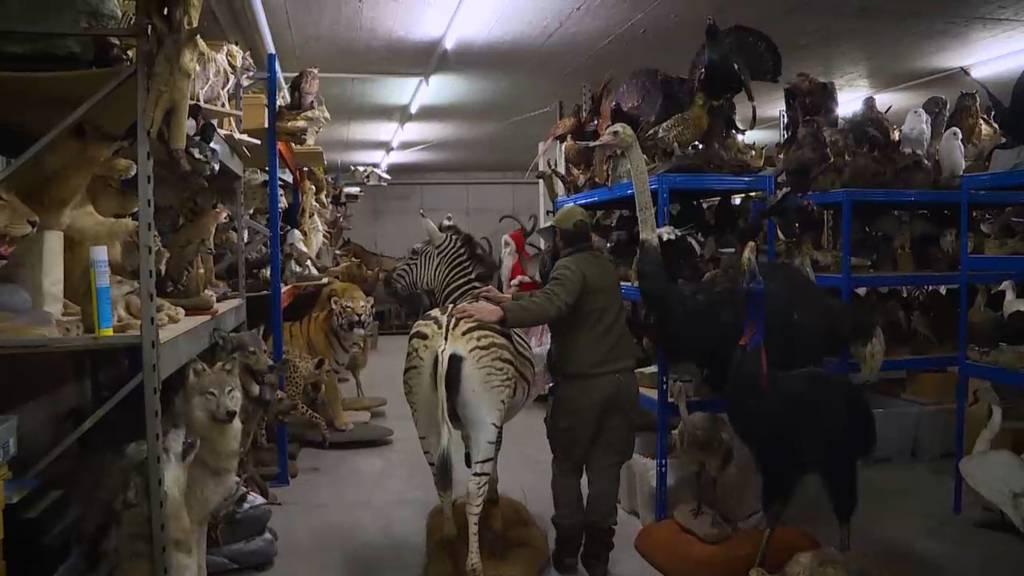 Tierisch exotisch: Walter und die toten Tiere