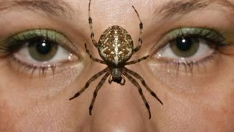 Kinder im Alter von nur sechs Monaten reagierten in einer Studie mit Stress, als ihnen Forscher Spinnen zeigten.