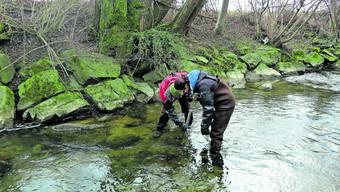 Spezialisten des Wasserforschungsinstituts Eawag der ETH nehmen Wasserproben: Untersuchungen von Bächen auf Pestizid-Belastung sind aufwendig.