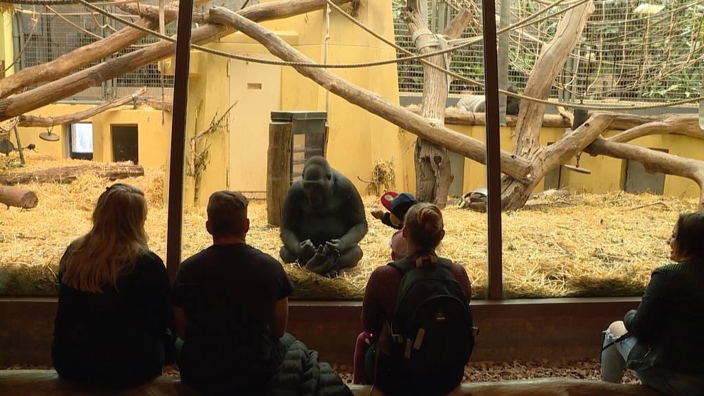 Zoo Zürich wieder offen: Zoobesuch mit Schutzmassnahmen
