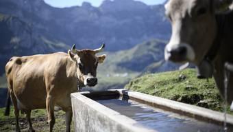 Ohne Vieh müsste alles Grasland aufgeforstet werden. Allerdings ist der Fleischkonsum heute zu hoch.