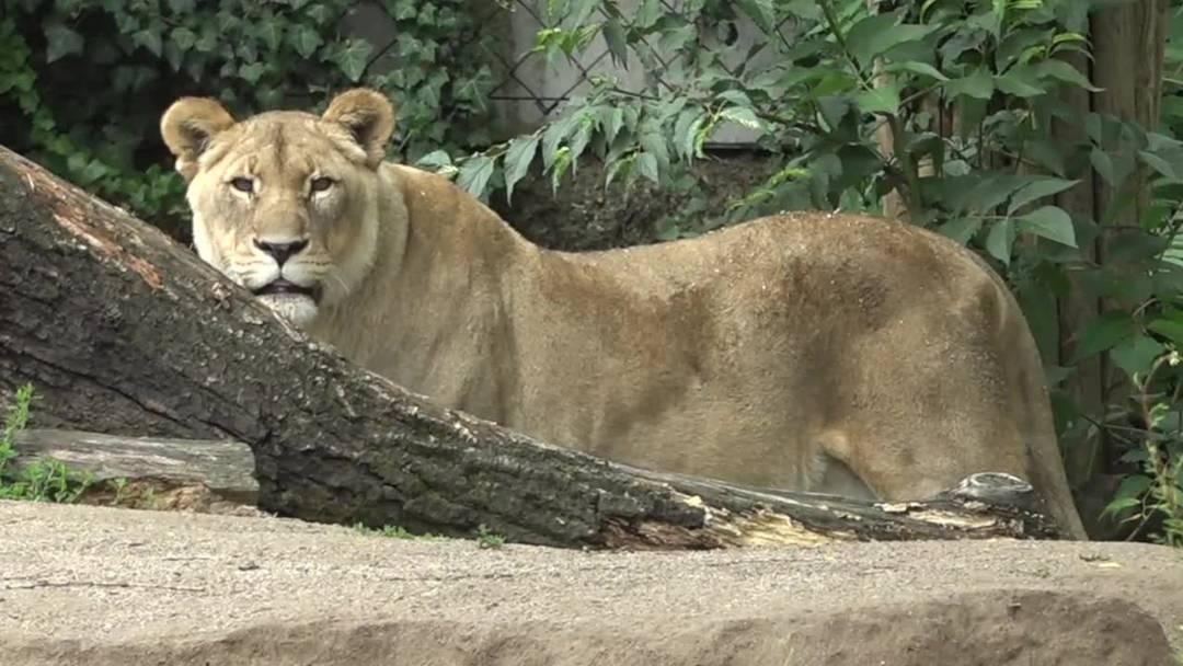 Zoo Basel: So sieht das Schutzkonzept für die Wiedereröffnung aus