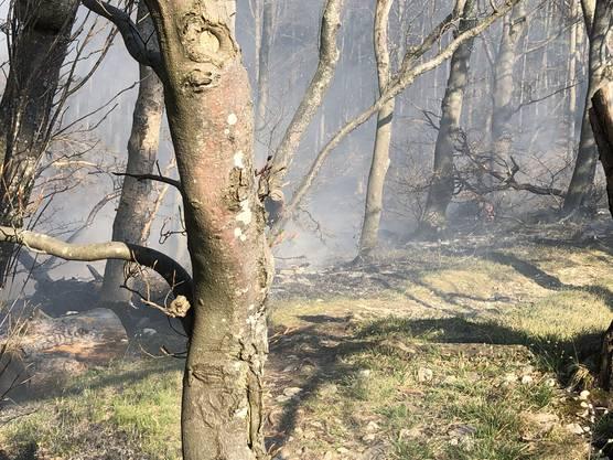 Derzeit besteht erhebliche Waldbrandgefahr.