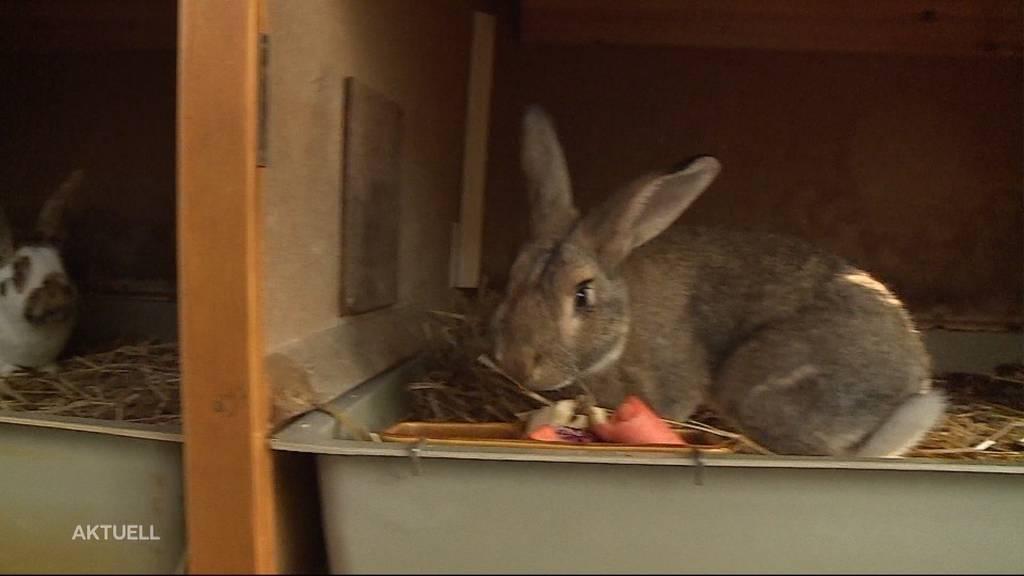 Kein Interesse mehr: Kaninchen auch im Winter ausgesetzt