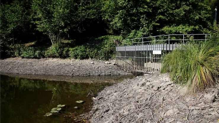 Der Pegel im Reidbachweiher sank nicht wegen der Trockenheit. ZVG