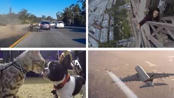 Schrecklich gefährlich und wahnsinnig mutig: die Videos der Woche und ihre Protagonisten.