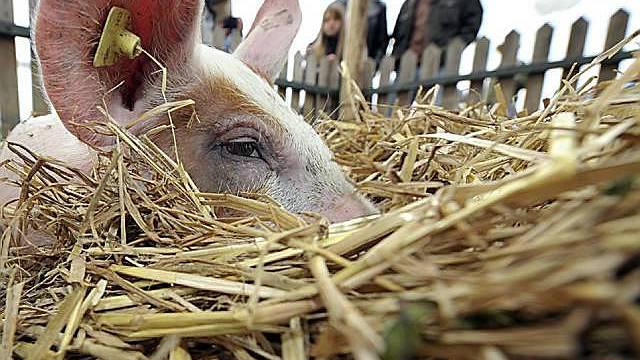 Weniger Schweinegrippeverdachtsfälle