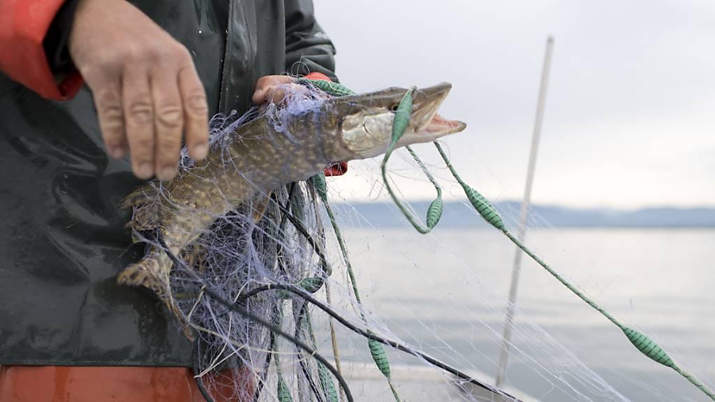 Im Thurgau dürfen in Zukunft bereits Zehnjährige fischen
