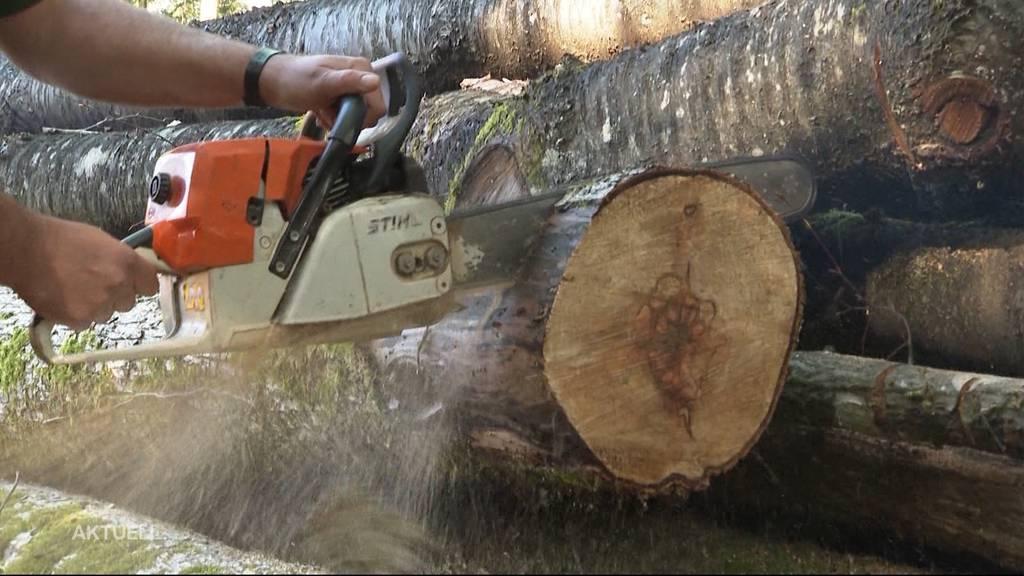 Wegen Energiekrise: Schweizer Holz ist so beliebt wie schon lange nicht mehr