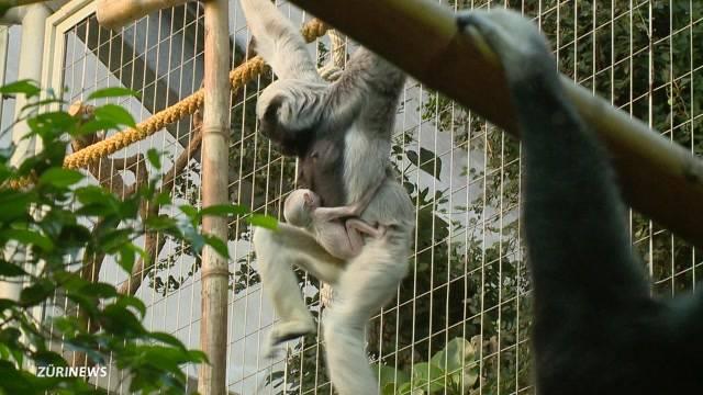 Affen-Mutterglück trotz Pille!