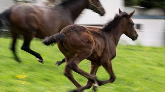 In Oetwil am See brannte ein Pferd durch und stiess eine Frau um. (Symbolbild)