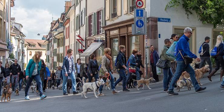 Hundespaziergang durch die Basler Innenstadt