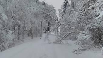 Bäume auf der BDWM Strecke