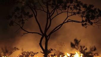 Seit Wochen wüten in Brasilien Tausende Feuer im Amazonasgebiet und den angrenzenden Steppengebieten. (Symbolbild)