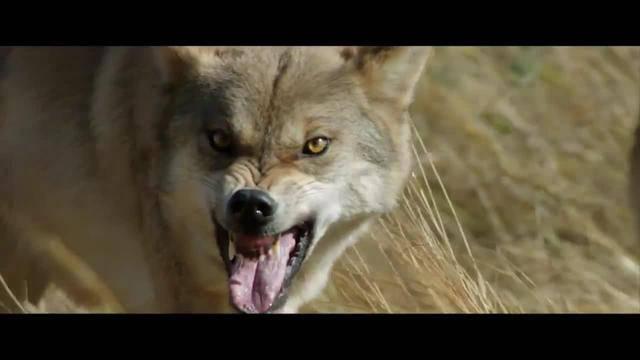 WOLF TOTEM (3D)