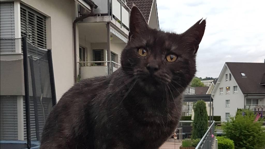 Verstümmelte und schwer misshandelte Katze vor die Haustür gelegt