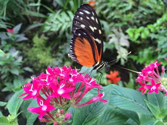 Auch in der Schweiz gibt es tropisches Klima: im Papiliorama in Kerzers.