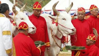 Die beiden Ochsen prophezeien eine gute Reisernte in Thailand.