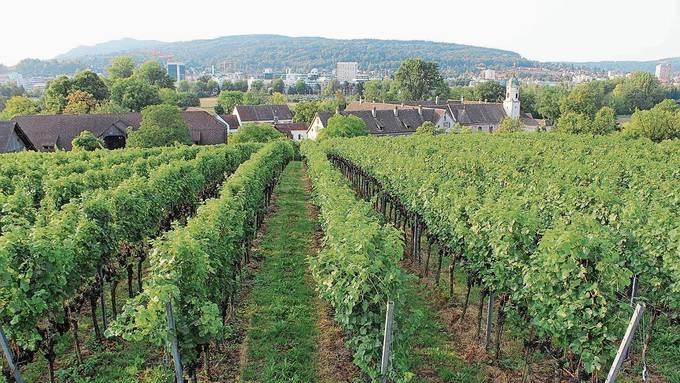 Der kleine Rebberg zwischen Kloster Fahr und Autobahn liegt auf Unterengstringer Boden.