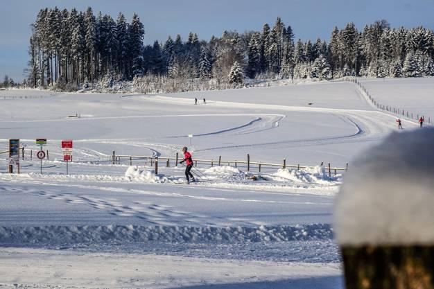 Beste Bedingungen herrschten gestern Vormittag auf der Horben-Loipe.