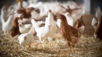 Der Bestand an Geflügel ist in den letzten zehn Jahren um die Hälfte gestiegen.