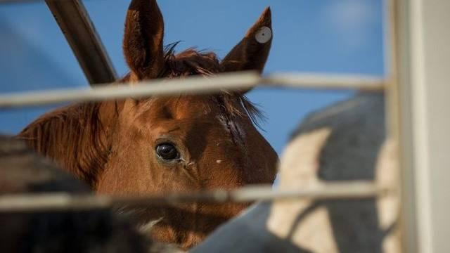 Lieferungen mit falsch gekennzeichnetem Pferdefleisch gelangten in 17 EU-Länder (Archiv)