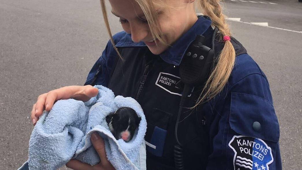Polizei Kapo Aargau Hundewelpen Einsatz