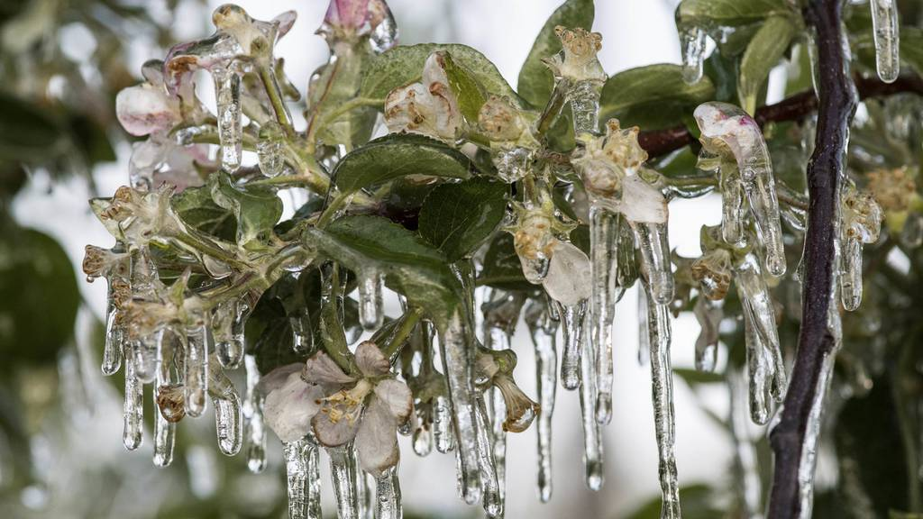 Neue Versicherung gegen Frostschäden