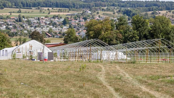 Im linken Tunnel haben 70 Aprikosenbäume Platz. Der Aargauer Regierungsrat hat entschieden, dass die Tunnel wegmüssen. (Archivbilder)