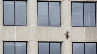Ein wahrer Kletterkünstler: Ein Waschbär klettert an der Aussenwand des UBS-Tower im US-Bundesstaat Minnesota 23 Stockwerke hinauf bis aufs Dach.