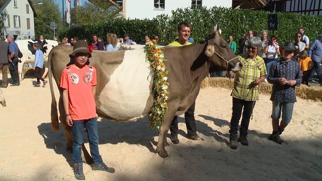 Viehschau: Miss Albisrieden gekürt