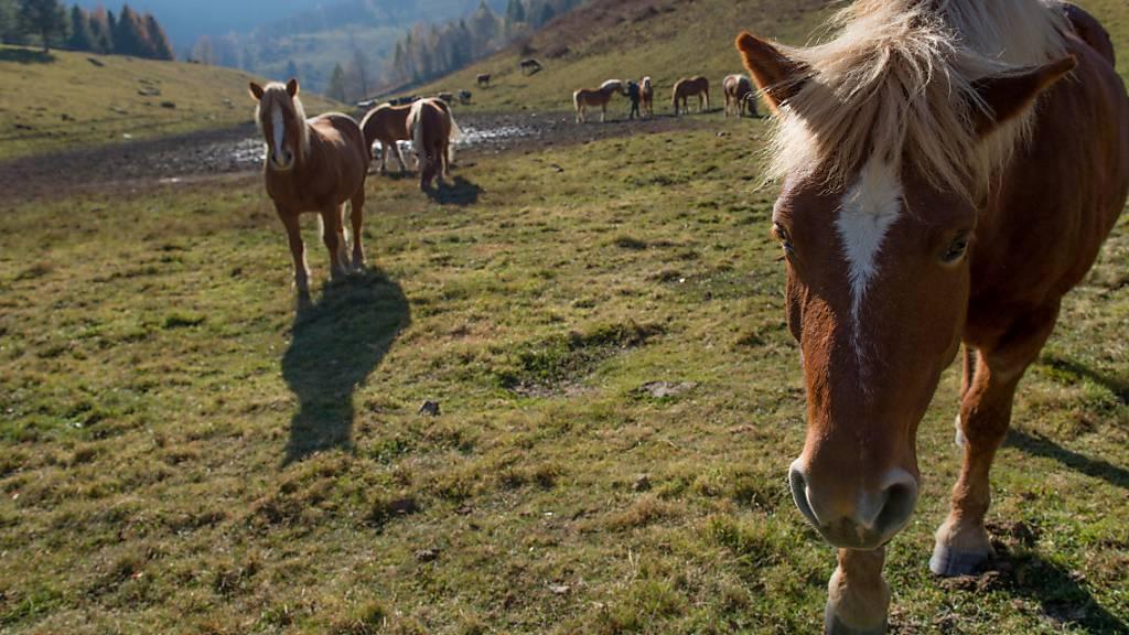 Stiftung für alte und verletzte Pferde wird nicht steuerbefreit
