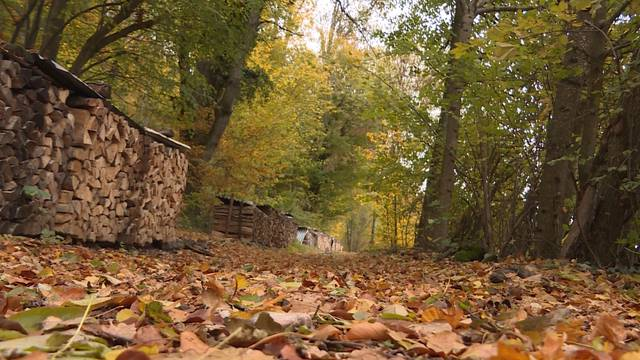 Hund im Wald bei Niederbipp ausgesetzt