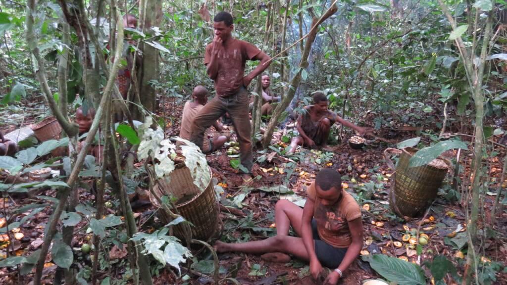 Jagen, Sammeln und Teilen im Regenwald: Das Ernährungssystem der Baka im Südosten Kameruns ist wie das vieler indigener Völker nachhaltig, regional und anpassungsfähig. Die Länder des Nordens könnten viel von ihnen lernen, findet die Welternährungsorganisation FAO (Pressebild)